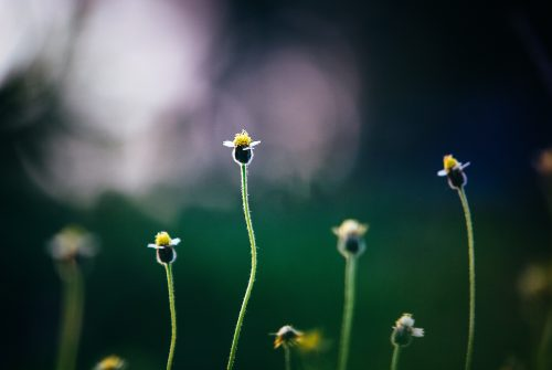 MEDTECH: Face the Sun...Leave the Weeds Behind